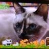 猫くるみちゃんTV出演